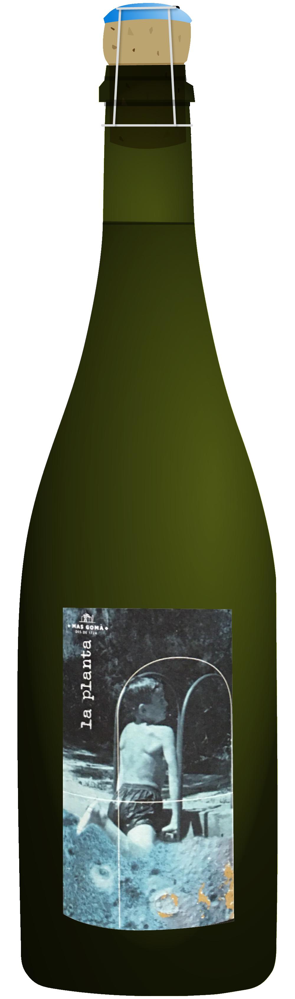 the natural wine company club august 2021 spain mas goma la planta